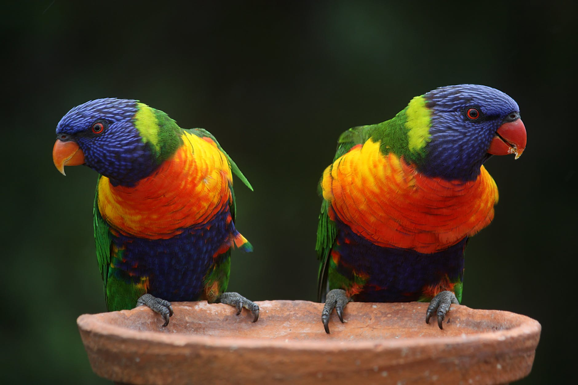 Parrots on a perch, illustrating distinct financial branding