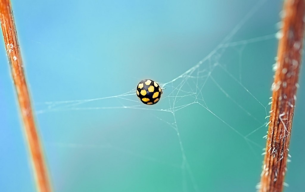Spider's web, illustrating the financial website keyword trap