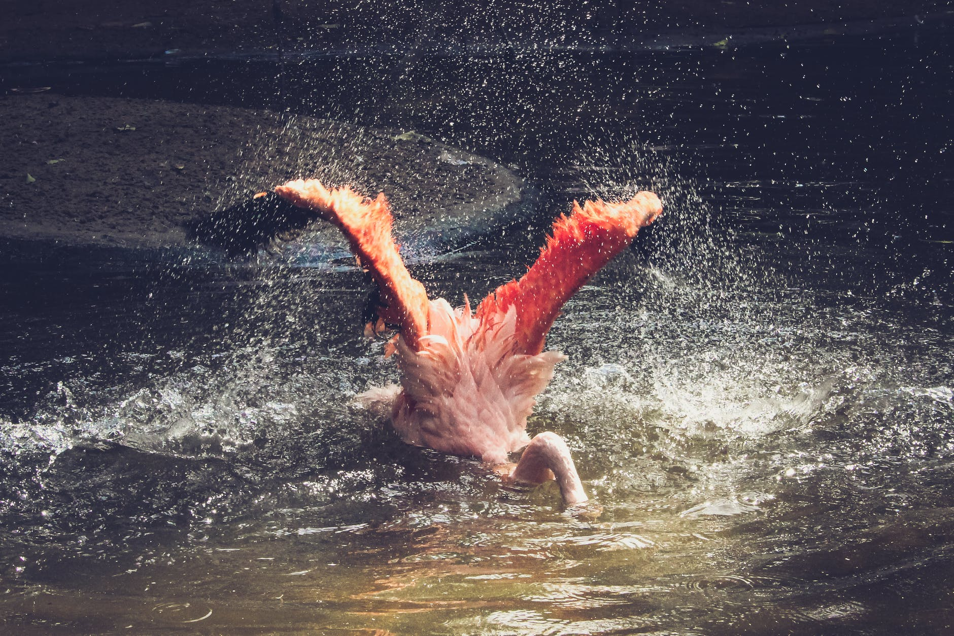 Flamingo with head in water, illustrating a financial website dropping in SEO rankings